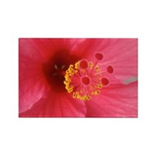 Pink Hibiscus Rectangle Magnet