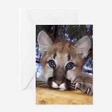 Mountain Lion Cub 2 Greeting Card