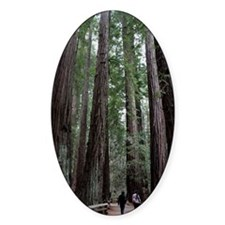 Muir Woods, California Oval Decal