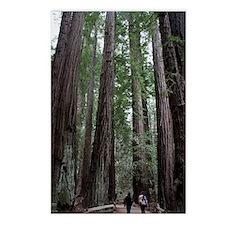 Muir Woods, California Postcards (Package of 8)