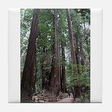 Muir Woods, California Tile Coaster