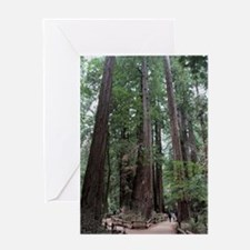 Muir Woods, California Greeting Card