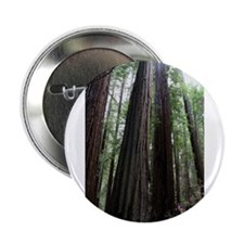 "Muir Woods, California 2.25"" Button"