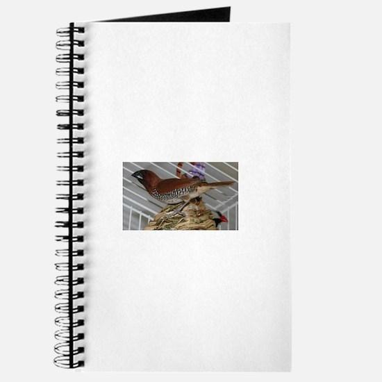 Cute Spice finch bird Journal