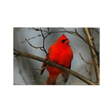 Red Male Cardinal Rectangle Magnet