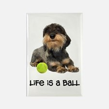 Wirehaired Dachshund Life Rectangle Magnet
