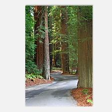 A drive through Richardson's Grove Postcards