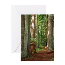 A view in the redwoods II Greeting Card