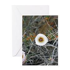 A desert bloom Greeting Card