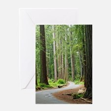 A roadway through the redwoods Greeting Card