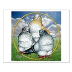 Owl Pigeons In Field Small Poster