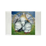Owl Pigeons In Field Rectangle Magnet (10 pack)