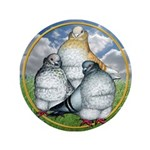 "Owl Pigeons In Field 3.5"" Button"
