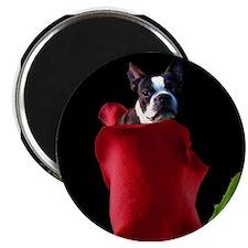 Red Rose Boston Terrier Magnet