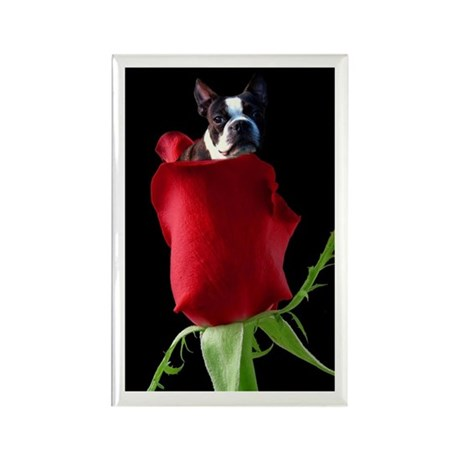 Red Rose Boston Terrier Rectangle Magnet