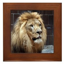 African Lion Framed Tile