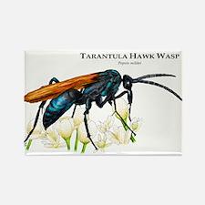 Tarantula Hawk Wasp Rectangle Magnet