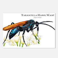 Tarantula Hawk Wasp Postcards (Package of 8)