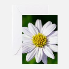White Flower Greeting Cards (Pk of 20)