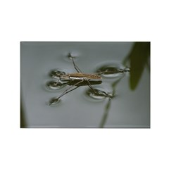 Water Strider Rectangle Magnet (10 pack)