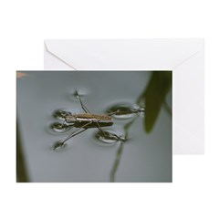 Water Strider Greeting Cards (Pk of 10)