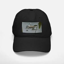 Water Strider Baseball Hat