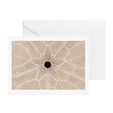 Sand Dollar Greeting Cards (Pk of 10)