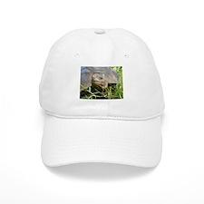 Galapagos Islands Turtle Baseball Cap