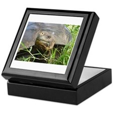 Galapagos Islands Turtle Keepsake Box