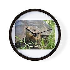 Galapagos Islands Turtle Wall Clock