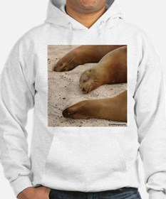 Galapagos Islands Sea Lions Hoodie
