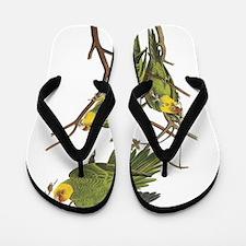 Carolina Parakeets Flip Flops