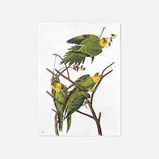 Carolina Parakeets 5'x7'area Rug