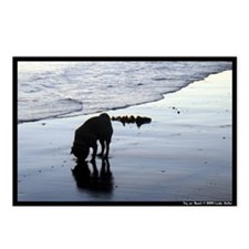 Cohasset Sandy Beach Postcards (Package of 8)