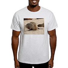 Galapagos Islands Sea Lion Ash Grey T-Shirt