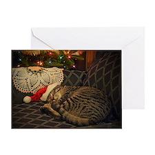 Santa Daisy Dreaming Kitten Greeting Card