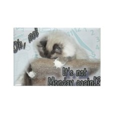 Cute Ragdoll Rectangle Magnet