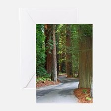 A drive through Richardsons Grove Greeting Cards