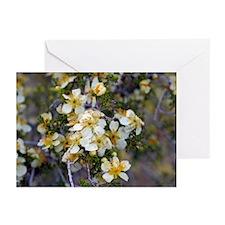 Desert Blooms Greeting Cards (Pk of 10)