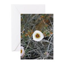 A Desert Bloom Greeting Cards (Pk of 10)