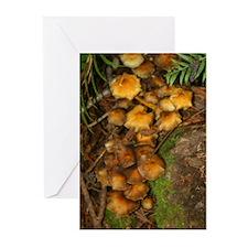 Wild Mushrooms Greeting Cards (Pk of 10)