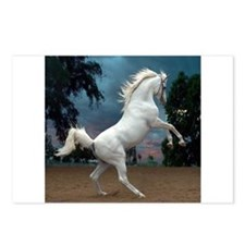 The White Stallion Postcards (Package of 8)