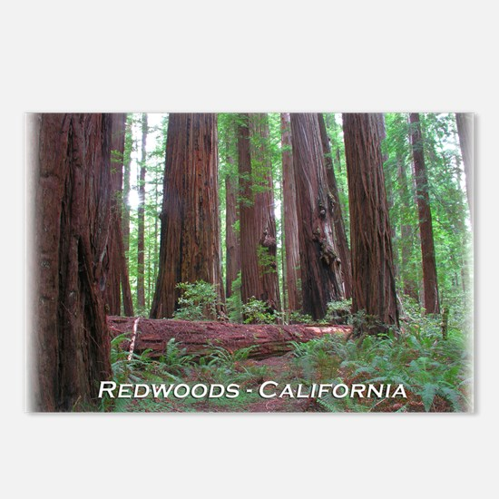 Cute Redwood national and state parks Postcards (Package of 8)