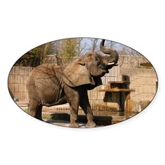 African Elephan 001 Oval Decal