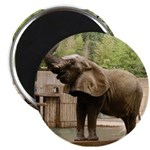 """African Elephant 002 2.25"""" Magnet (10 pack)"""