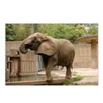 African Elephant 002 Postcards (Package of 8)