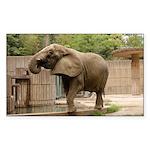 African Elephant 002 Rectangle Sticker 50 pk)