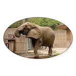 African Elephant 002 Oval Sticker (10 pk)