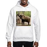 African Elephant 002 Hooded Sweatshirt