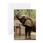 African Elephant 002 Greeting Cards (Pk of 10)